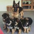 Megmentett kutya család