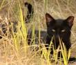 Süt a nap, mentett cica