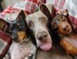 kutyák boldogan