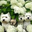 Virágos kutyatár