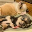 Kutyusok - alvás