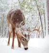 Tél a vadonban