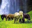 Csorda, lovak legelnek