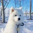 Tél, kutya, öröm