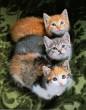 3 kölyök cica