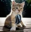 Macska - egér