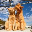 Házi macska család