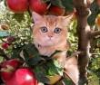Almafán, macska