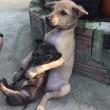 Kutya kölyök tesók