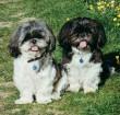 Kutya testvérek