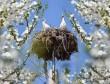 gólyafészek a villanyoszlop tetején