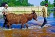 Állatmentés a Duna áradása miatt a Xantus János Állatkertben - belvíz keletkezett