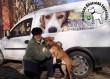 Bubu (Pizzás) kutyust megmentettük!