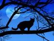 Éjszakai macskales
