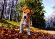 Kutya-jó ősz :)