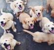 Kutya, kutyabarát, kutyaszeretet