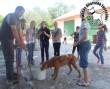 Kutyák tartásával ismerkednek a gyerekek