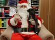 Kutyakarácsony, menhely támogatás
