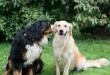 Lola és Jimmy a kutyapáros