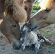 Paci family :)