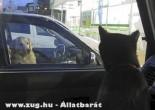 Kutya-macska szemmel verés :)