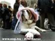 Kutya úrnõ
