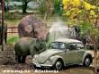 Elefánt rabszolgák