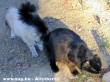 A cica a macska seggében