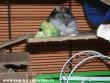 Katja és a brokkoli :D