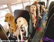 Megyünk a kutyaiskolába!