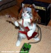 Rocker macska
