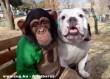 Kutya és majom haverság