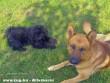 A kutyáink Alex és Tücsi 3 évvel ezelõtt. :)