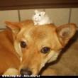Kutya-egér barátság