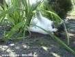 Nyarvinka kertészkedik