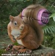 Divatos mókus