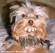 Fogas kutya :D