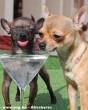 Szomjas kutyák