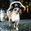 Kalóz kutyus