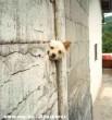 Kõmíves Kelemen kutyája