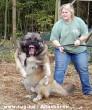 A kutya harap