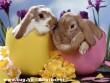 Húsvéti meglepetés