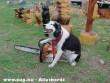 Láncfûrészes kutya