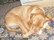 Zafira alszik a nyuszijával