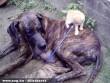 Tobi(cica), Zeta(kutya), kölykök(kutyák)