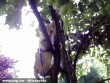 Tobi(cica) a fán