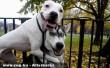 Kutyabaráti szeretet
