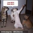 Állati nagy buli