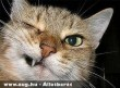 Kacsintó cica 2.