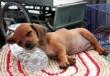 A megfáradt kutyuli :)